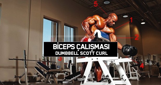 Biceps Çalışması – Dumbbell Scott Curl