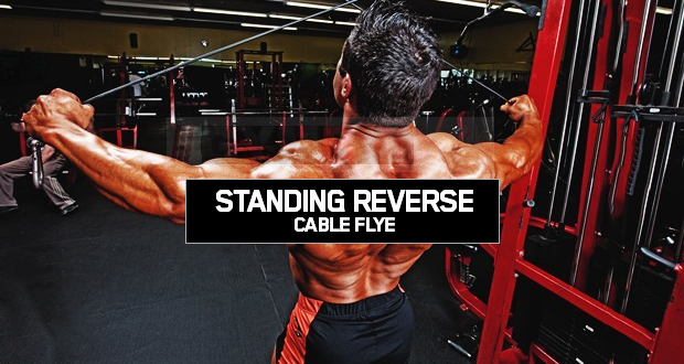 Standıng Reverse Cable Flye