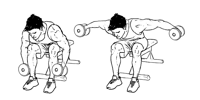 Seated-Bent-Over-Rear-Delt-Raise-3